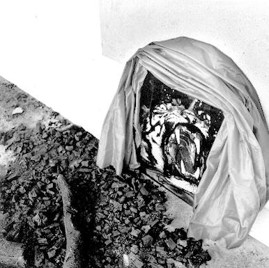 erna nijman kunstenares